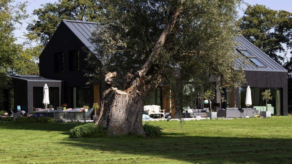 Monumentale boom achter schuurwoning Schoorl